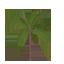 Ruffle Palm Symbol Style