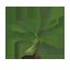 Banana Tree Symbol Style