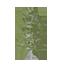 White Poplar Symbol Style