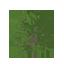 White Oak Symbol Style