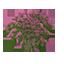 Rhododendron Azaleas Symbol Style