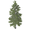 Baldcypress Symbol Style